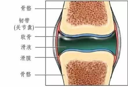滑膜炎1.jpg